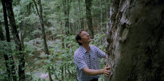 Urban Distribution - La symphonie des arbres